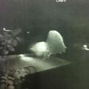 OVNI / UFO é filmado por câmera de segurança em uma piscina na Flórida, EUA 25