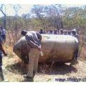 OVNIs / UFOs caem no Zimbabwe, África 1