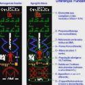 Espaço do Leitor: COSMOS X - Palestra 'A Réplica Do Arecibo'  20