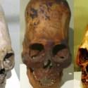 Crânios alongados podem ter servido como uma vantagem para a sobrevivência 3