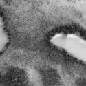 Teria alguém encontrado lagos com margens arborizadas em Marte 6