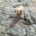 Bolívia: Pegadas na rocha podem comprovar que gigantes habitaram a América do Sul 16