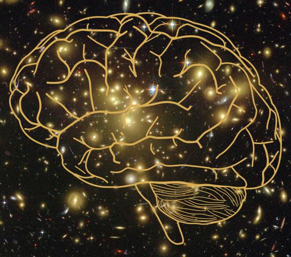 a consciência uma qualidade fundamental do Universo