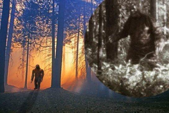 Avistamento de Bigfoot? Homem atira contra criatura que avistou durante acampamento