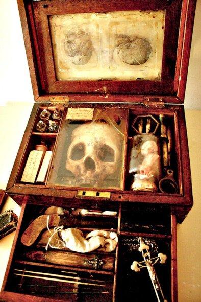 O museu que expõe espécimes negadas pela ciência 3