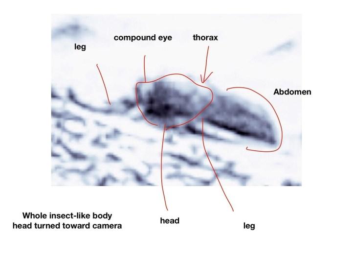 Fotos mostram evidências de vida em Marte, diz entomologista da Universidade de Ohio