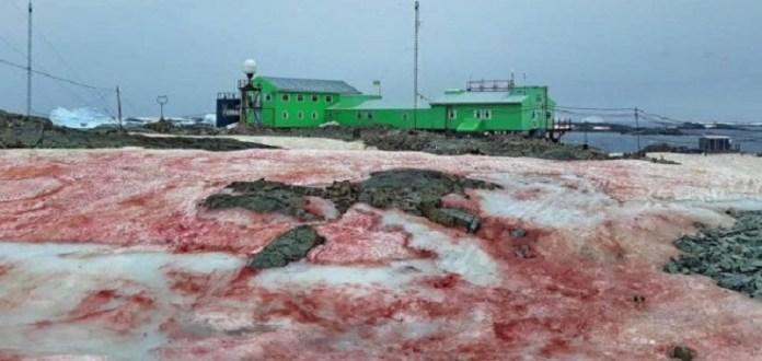 Neve fica vermelha ao redor de estação de pesquisa na Antártica