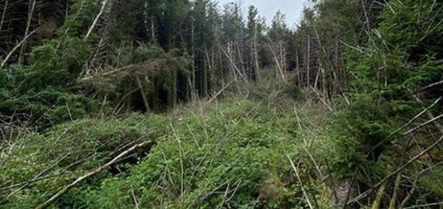 """Homem descobre """"local de acidente de OVNI"""" em floresta na Inglaterra"""