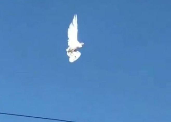 Pássaro fica 'congelado' no ar em estranho vídeo