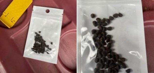Homem planta sementes misteriosas que vieram da China, sem ele encomendar