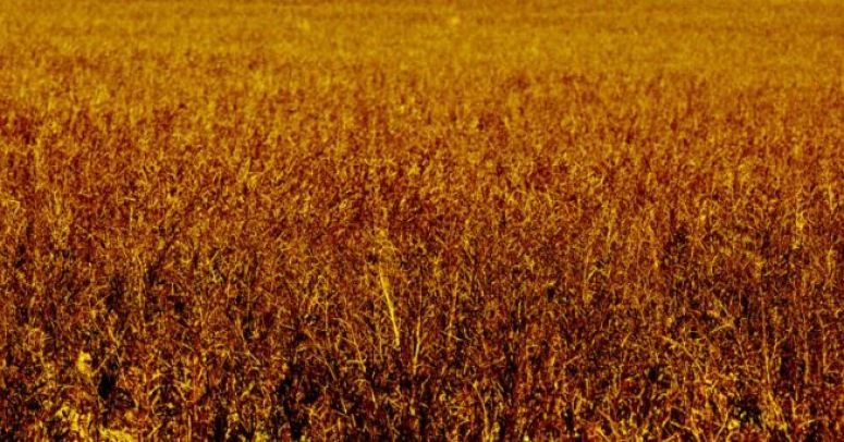 Autoridade alerta sobre fome de proporções bíblicas em 2021