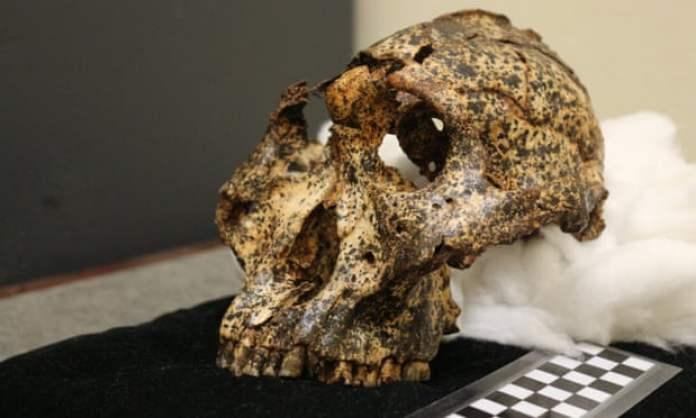 Crânio de primo humano de 2 milhões de anos é encontrado em caverna sul-africana