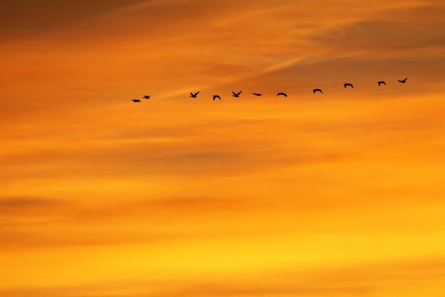 """Cientistas descobrem que pássaros têm um misterioso """"sentido quântico"""""""