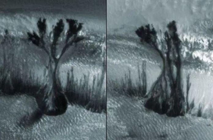 O enigma das árvores marcianas: o que essas fotos estranhas mostram?