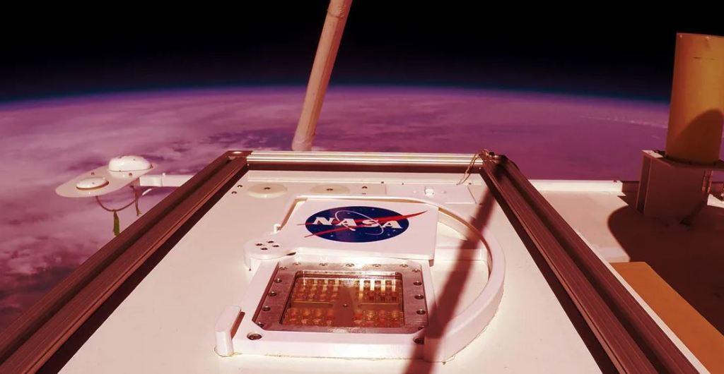 Bolor negro da Terra pode sobreviver em Marte, afirma a NASA