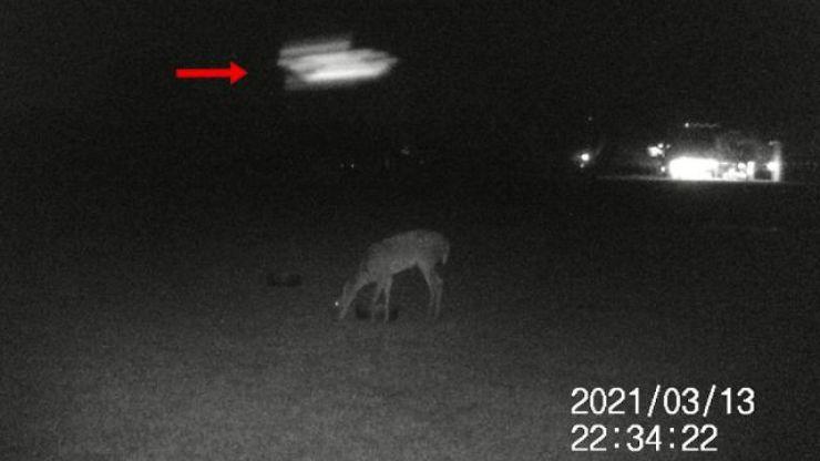 OVNI é filmado passando logo acima de cervo