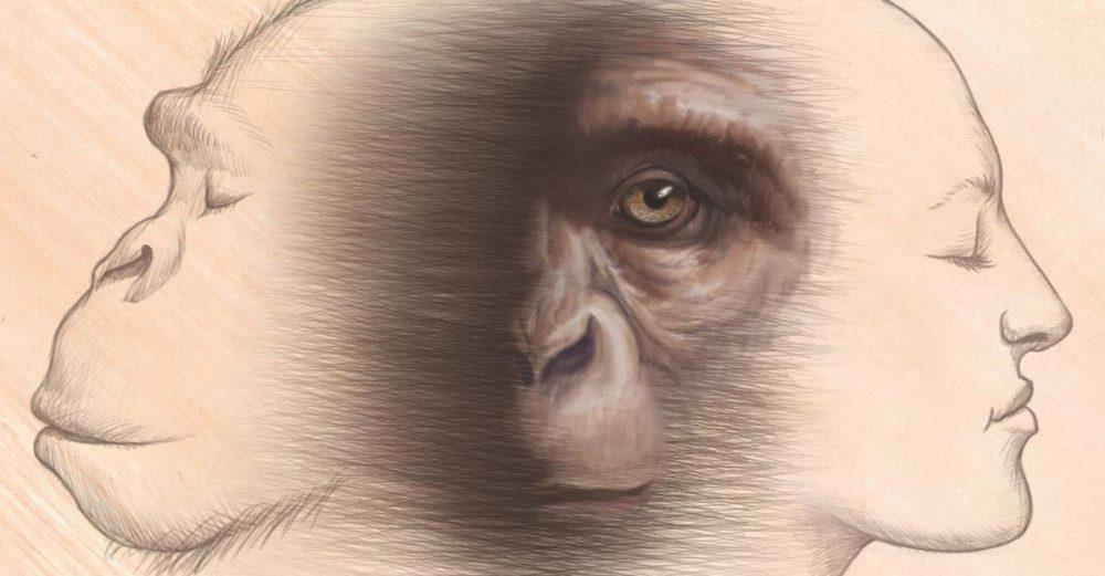 Nossa compreensão da origem humana é incompatível com o registro fóssil