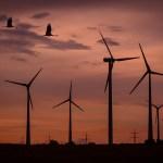 RenovAr: adjudicaron 17 proyectos para generar 1.109 MW en energías renovables