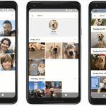 Google Fotos ahora reconoce perros y gatos