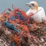 Adiós al plástico: crean un polímero que se recicla indefinidamente