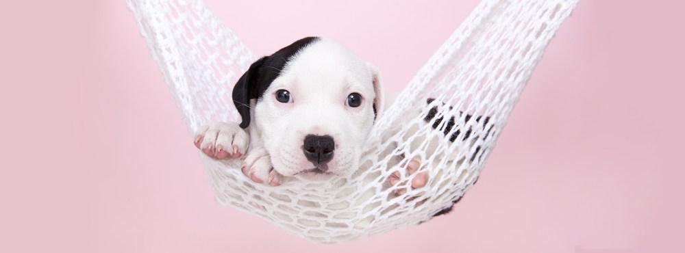 Puppy stafford hangmat