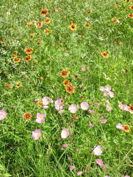 OK, some parts are scenic. It's Texas in the spring, so there are wildflowers lining the roads.