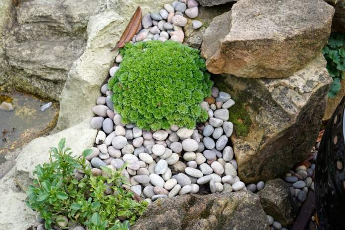 21 Amazing Rock Garden Ideas to Inspire! {Updated 2019 with Pictures} 4