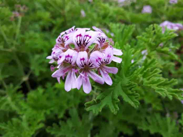 Plants that Repel Ticks: Top 10 Picks and Tricks! 2019: Own The Yard 4