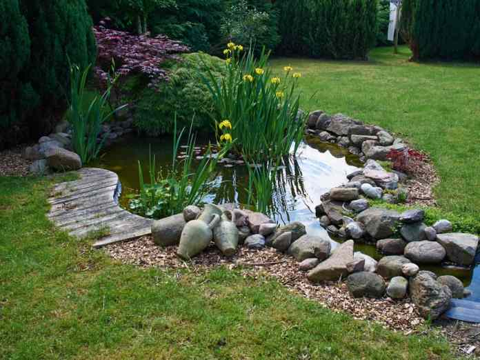 Best Plants for Water Gardens (+ Images to Spark Ideas!) 2019 14