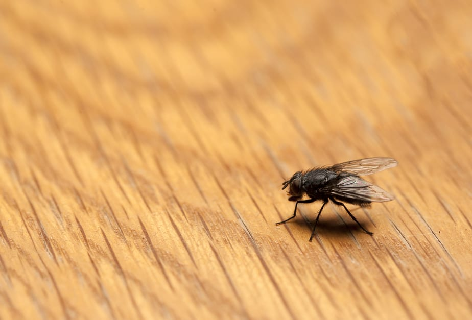 how to get rid of flies on the patio