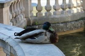 Eine kurze Verschnaufpause am Kapitelbrunnen