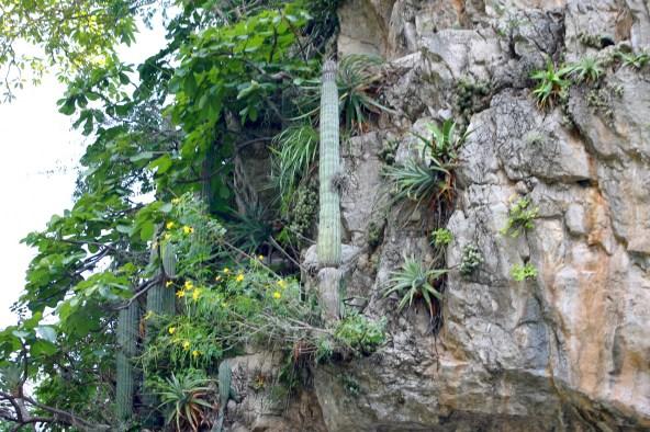 0164_SanCristobal_CanonDeSumidero_Pflanzen-und-Kakten-auf-dem-kleinsten-Vorsprung