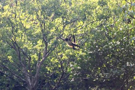 0185_SanCristobal_CanonDeSumidero_Die-Affen-in-den-Baeumen-vom-schwankenden-Boot-zu-fotografieren-war-nicht-einfach