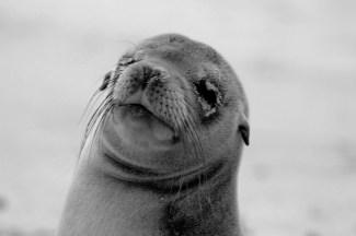 Galápagos, Santa Fe: Kann mir mal jemand den Sand aus den Augen wischen