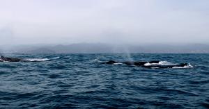 Ecuador_Puerto-Lopez107_Whale-Watching