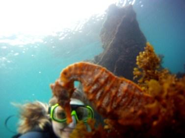 Galápagos, Santa Isabela, Tour Los Tuneles: Rotes Riesenseepferdchen ganz nah