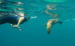 Galápagos, Rábida: Otti und ihr Seelöwe