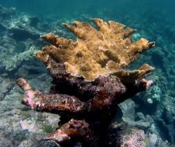 Belize Barrier Reef: Schöne Korrallen