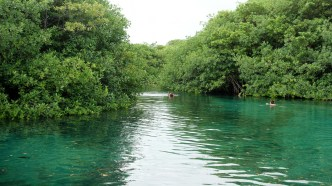 Mexiko, Tulum, Cenoten Tauchen, Casa Cenote
