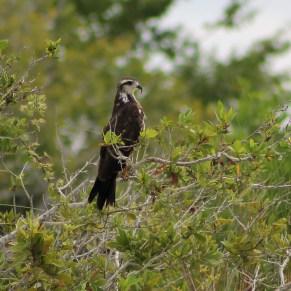 Mexiko, Laguna Bacalar: Im Vogelschutzgebiet