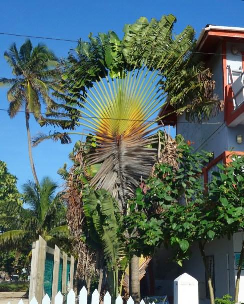Belize, Caye Caulker: Außergewöhnliches an jeder Ecke