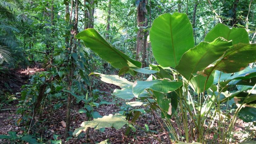 Palenque, Dschungeltour