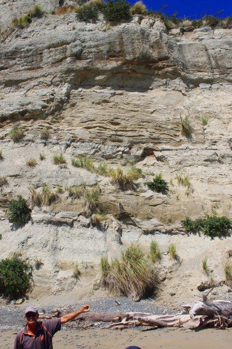 Cape Kidnapper: Geologie der Klippen, erklärt von unserem Guide und Traktorfahrer