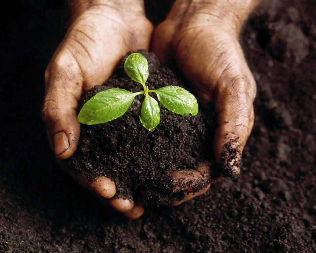 Take care of the environment by planting a tree