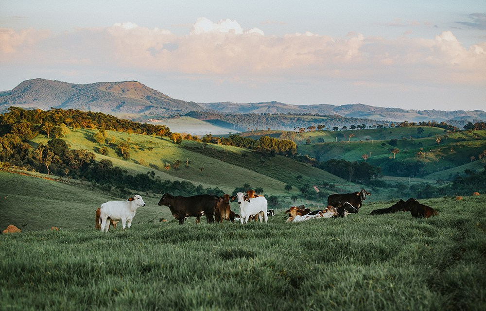 Everything You Need to Know About Farming Management Courses
