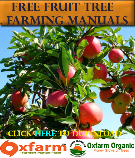 Oxfarm Organic Ltd -