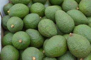 Export avocado