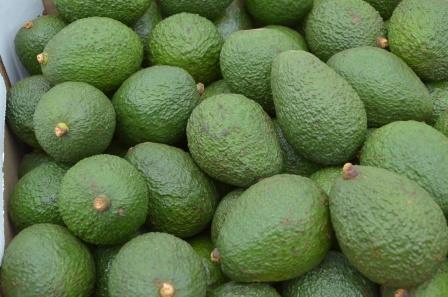 Export avocado