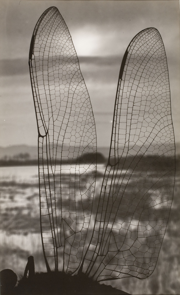 Emili Godes (c.1930)