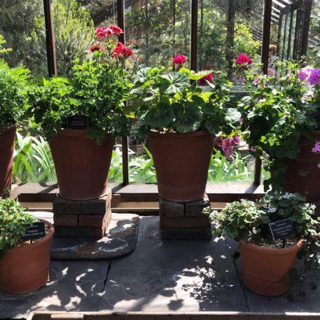 Pelargonium House, Chelsea Physic Garden